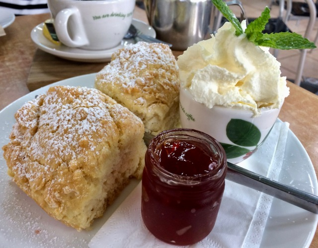 DT@Rodneys Cafe - Plants Plus, Piliago ACT